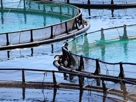Aquaculture to Produce Majority of Global Food Fish Supply by 2030 | Precision Agriculture | Scoop.it