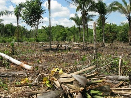 Brazil to Stop Illegal Logging in Amazon Forests with Tracking ... | Rainforests and Animals | Scoop.it