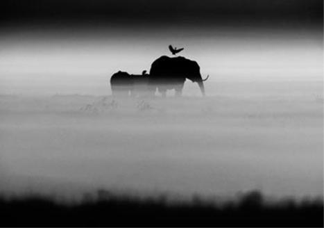Laurent Baheux, L'Afrique sauvage | The Blog's Revue by OlivierSC | Scoop.it