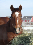 A Year With Horses: Core to Core | From the Equine Blogosphere | Scoop.it