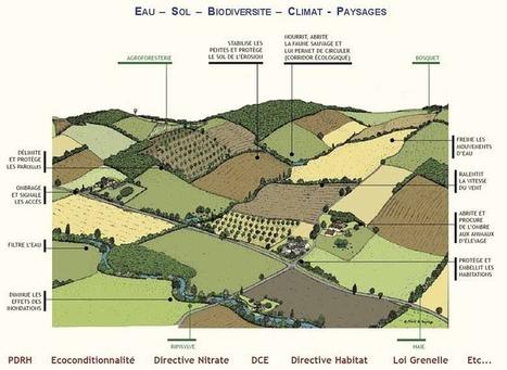 Arbre & Paysage : végétation spontanée | Le BONHEUR comme indice d'épanouissement social et économique. | Scoop.it