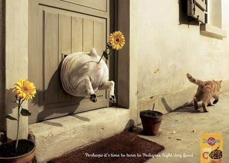 Pedigree Advert | ADMAREEQ - Quality Marketing and Advertising Campaigns Blog | Marketing&Advertising | Scoop.it