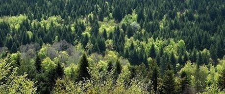 Mobiliser encore plus l'accroissement forestier, source renouvelable d'énergie   Interprofession Forêt Bois des Pyrénées-Atlantiques   Scoop.it