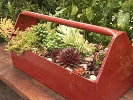 Carry-along succulents | Upcycled Garden Style | Scoop.it