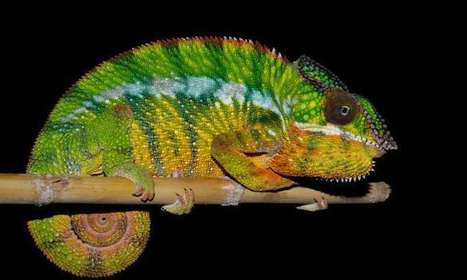 Eleven new species found in Madagascar | GarryRogers NatCon News | Scoop.it