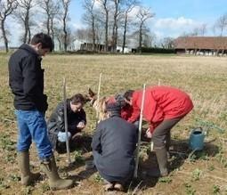 Sol en Caux : mettre en oeuvre l'agriculture de conservation dans des système avec pommes de terre et lin - Agro Perspectives | AGRONOMIE VEGETAL | Scoop.it