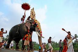 Thrissur Pooram, Kerala, India   ShadowChief   Scoop.it