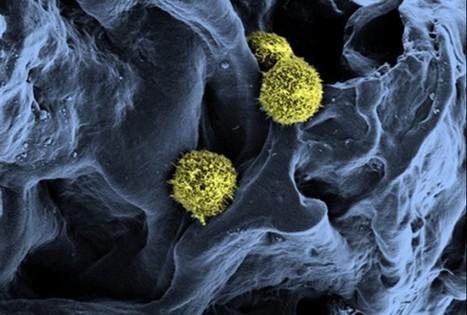 New Treatment For Blood Diseases Using Artificial Bone Marrow - RedOrbit | Biologie | Scoop.it