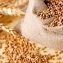Régime : Pour le coeliaque | intolérant au gluten | Scoop.it
