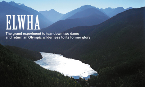 ELWHA RIVER DAM : Freeing a River to It's Former Glory - A Grand Experiment | Biodiversity IS Life  – #Conservation #Ecosystems #Wildlife #Rivers #Forests #Environment | Scoop.it