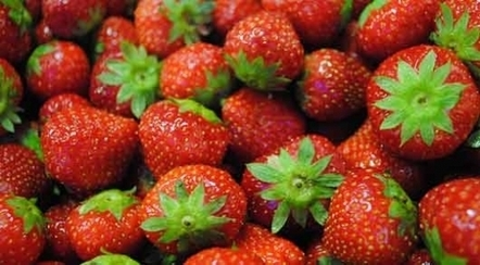 Fruits surgelés : Roger Descours poursuit son développement en Serbie | agro-media.fr | Actualité de l'Industrie Agroalimentaire | agro-media.fr | Scoop.it