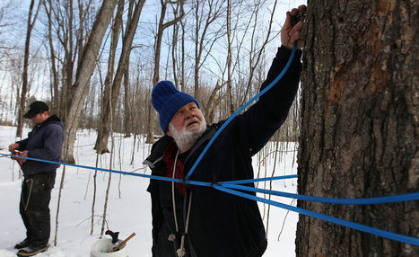 Maple Syrup Takes Turn Toward Technology | On the Plate | Scoop.it