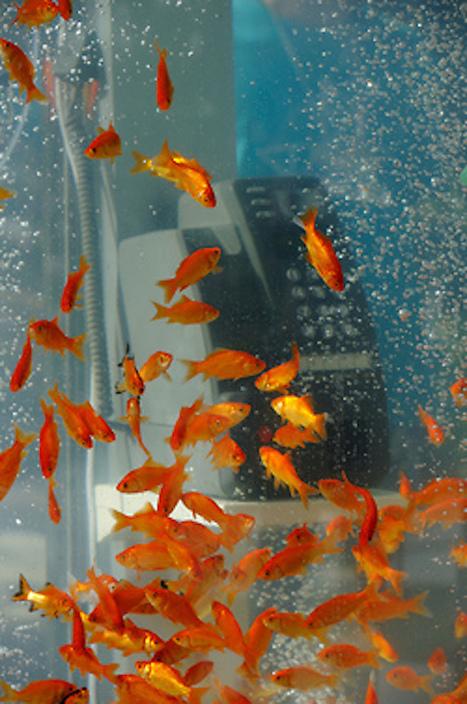 En Japón los peces usan los teléfonos públicos | Sociedad | Scoop.it