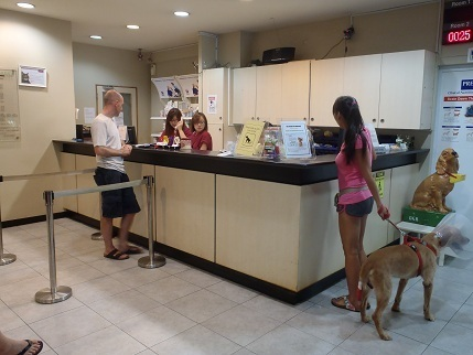 Mount Pleasant Veterinary Service Providing a Routine Checkups in Singapore   Mount Pleasant Vet   Scoop.it