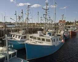 Canada at Risk of Losing World Leader Status on Ocean Science - The Epoch Times | Nova Scotia Fishing | Scoop.it