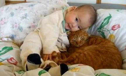 Cat & Baby Cuddle (video) | This Gives Me Hope | Scoop.it
