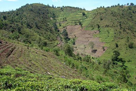 Causes of deforestation getting lost in REDD+ rhetoric – analysis | sustainable rural development in Nicaragua | Scoop.it