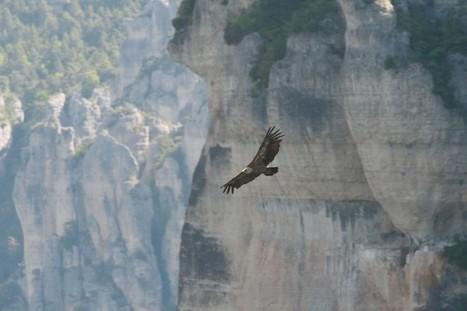 Le roi sur la montagne | Le Saule Causeur | C@fé des Sciences | Scoop.it
