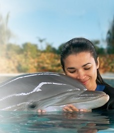 Swimming with Dolphins! | Lifestyle | Scoop.it
