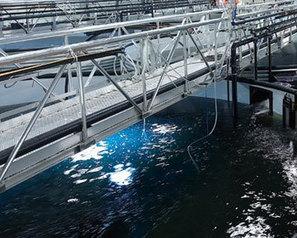 Nanotech silver filter could revolutionize indoor rainbow trout farming - FIS | Aquaculture World | Scoop.it