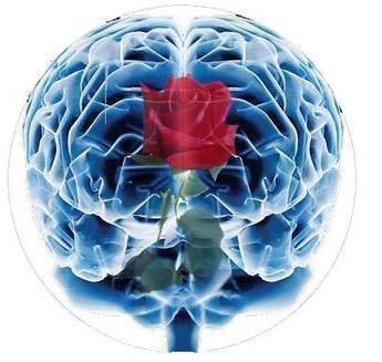 Cienciaes.com: Cerebro y emociones. | Podcasts de Ciencia | Robot & Cerveau | Scoop.it