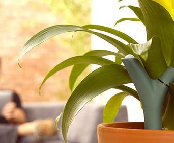 Parrot - Flower Power - Capteur intelligent pour vos plantes   Design Thinking & Expérience Client   Scoop.it