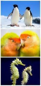 El amor en el mundo de los animales   seres vivos   Scoop.it