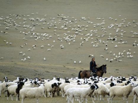 Herding Animals   Early Humans   Scoop.it
