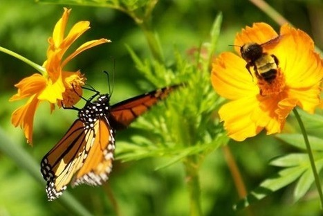 Of Butterflies and Bees: Moving Toward Wholeness | Société durable | Scoop.it