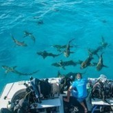 @SylviaEarle Alliance #MissionBlue ~ #HammerheadSharks #CocosIsland #hopeSpots | Rescue our Ocean's & it's species from Man's Pollution! | Scoop.it