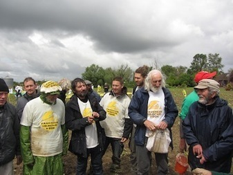 Les Faucheurs volontaires ont arraché près de Toulouse des OGM interdits | Abeilles, intoxications et informations | Scoop.it