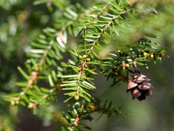 5 conseils phyto-aromatiques pour passer un hiver en santé | Forme - Santé - Relaxation | Scoop.it