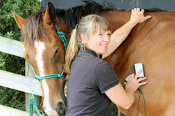 Therapist gets kick out of horses - Auckland stuff.co.nz | Horse Care | Scoop.it