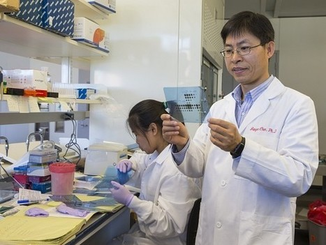 MicroRNA Pathway Could Lead to New Avenues for Leukemia Treatment | Amazing Science | Scoop.it