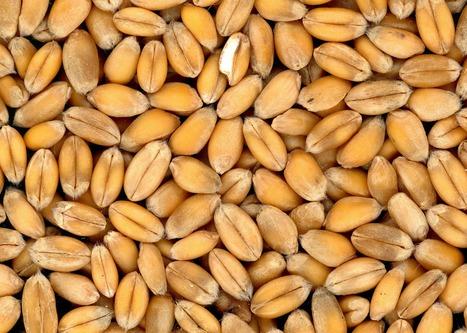Droit commercial : pour une exception alimentaire | Questions de développement ... | Scoop.it