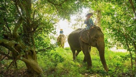Rencontre interactive avec les éléphants en Thaïlande - Le Figaro   Chiang Mai   Scoop.it