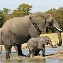 Reclaiming conservation through community buy-in | Poaching & Wildlife Crime | Scoop.it