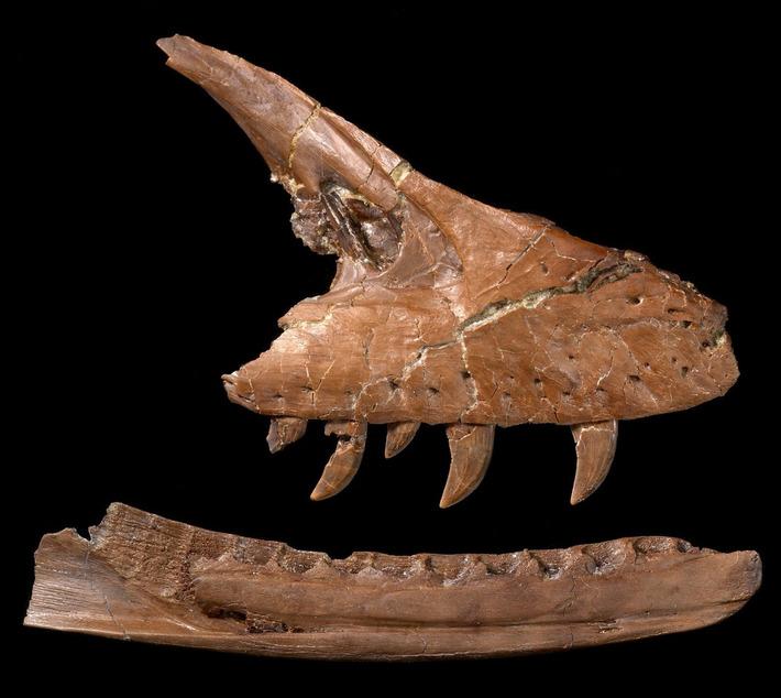 New carnivorous dinosaur species found in Canada | Kiosque du monde : Amériques | Scoop.it