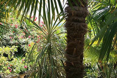 Dordogne Gardens - gardens to visit in the Dordogne and Perigord   Small Hotel Dordogne   Scoop.it