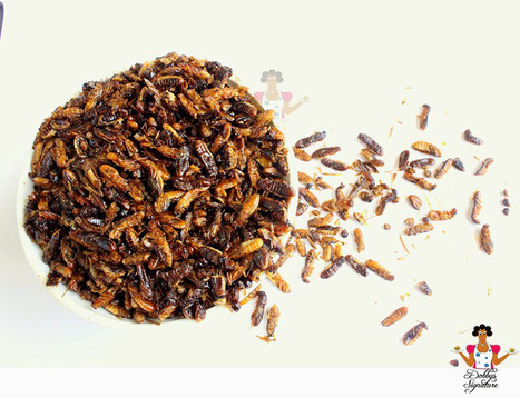 Insectos consumidos en la actualidad: La Termita | Entomophagy: Edible Insects and the Future of Food | Scoop.it