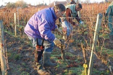 Un enjeu de taille | Agriculture en Gironde | Scoop.it