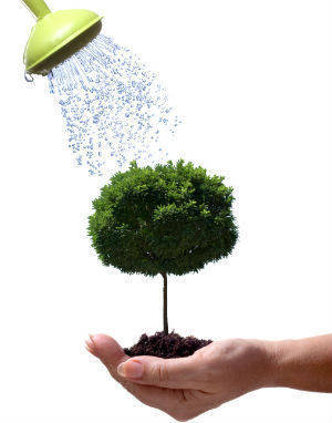 Wise Watering Tips to Help Your Trees Survive the Drought » CJ S Tree Service of Omaha | Tree Service | Scoop.it