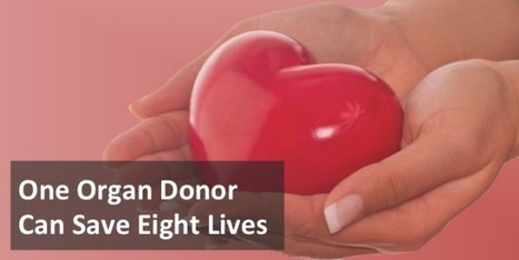 Living On Through Organ Donation | Health Communication and Social Media | Scoop.it