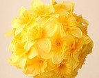 Sunshine Spring Love with Lemons by Valeriy Deren on Etsy   Beauty and the Bees Tasmania   Scoop.it