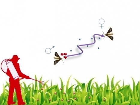 INRA - goutte d'insecticide et insecte ravageur | Abeilles, intoxications et informations | Scoop.it
