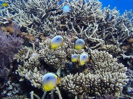 "Scientists Have Found A New Way To Save The World's Coral Reefs, And It's Pretty Fishy (""it's doable"") 