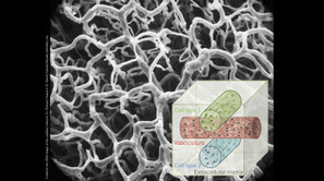 Scientists Discover Way to 3D Print Tissues With Blood Vessels | Algorithmic Design | Scoop.it