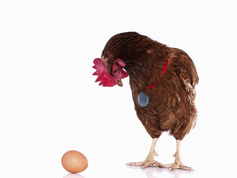 Sustainability and financial performance: The chicken-egg dilemma | Managing Sustainable Enterprise | Scoop.it