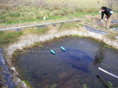 De herbicidas y agua dulce   Natura educa   Scoop.it