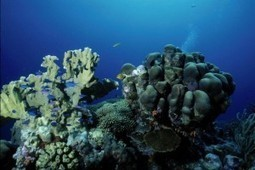 Bonaire ranks high again in Scuba Diving magazine ratings | All about water, the oceans, environmental issues | Scoop.it
